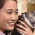前田敦子の愛猫の種類と名前は?アメショーのポッツが夜会に初登場!